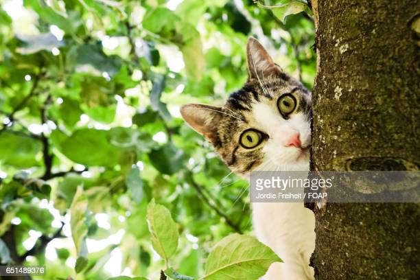 Portrait of cat hiding behind tree