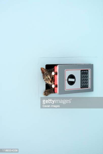 portrait of cat hiding in safe deposit box - one animal stock pictures, royalty-free photos & images