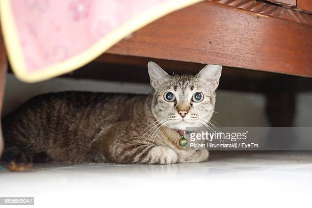 portrait of cat hiding under wooden bed at home - cat hiding under bed stock pictures, royalty-free photos & images