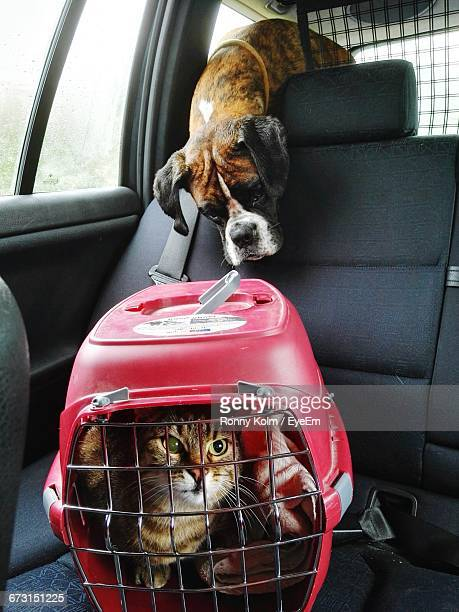 Portrait Of Cat In Cage Against Boxer On Car Seat