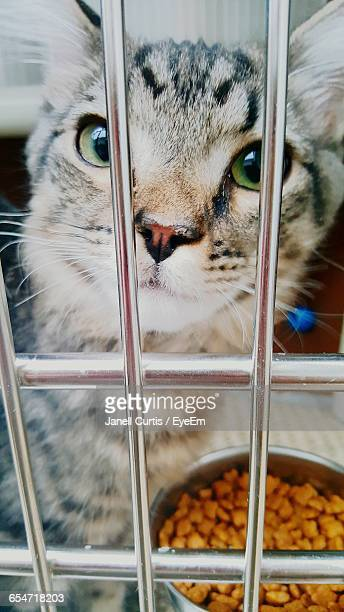 Portrait Of Cat In Cage At Animal Shelter