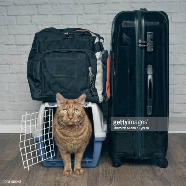 Portrait Of Cat In Cage By Luggage On Floor