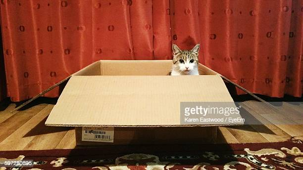 Portrait Of Cat In Cardboard Box At Home