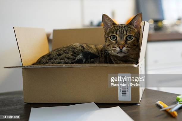Portrait Of Cat In Cardboard Box On Table