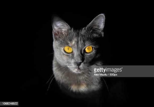 Portrait of cat in darkness
