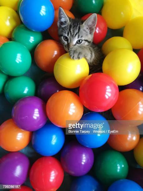 Portrait Of Cat In Multi Colored Balloons