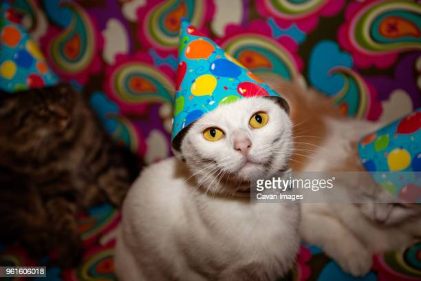 Portrait Of Cat In Party Hat