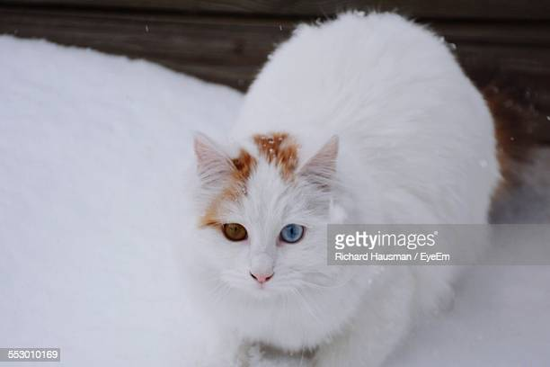 Portrait Of Cat In Snow Covered Yard