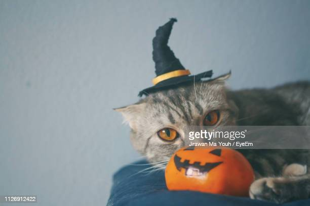 portrait of cat jack o lantern - pumpkin cats stock pictures, royalty-free photos & images