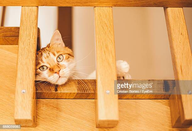 portrait of cat lying at staircase - bortes stock pictures, royalty-free photos & images