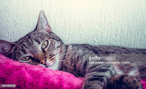 Portrait Of Cat Lying On Bed At Home