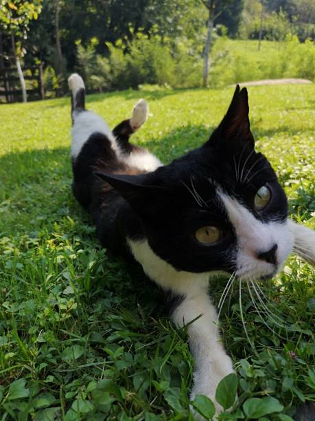 Portrait Of Cat Lying On Grass