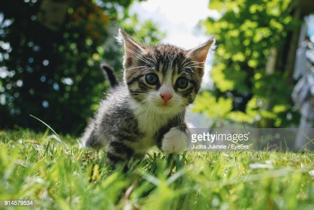 portrait of cat on field - kitten stock pictures, royalty-free photos & images