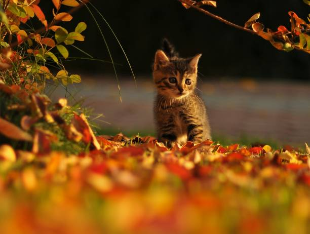 Portrait Of Cat On Leaves During Autumn