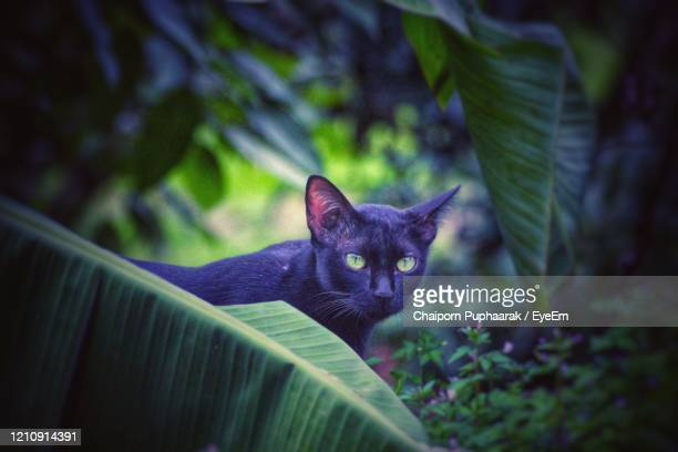 portrait of cat on plant - black siamese cat stock pictures, royalty-free photos & images