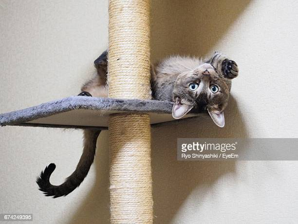 Portrait Of Cat On Scratching Post Against Wall