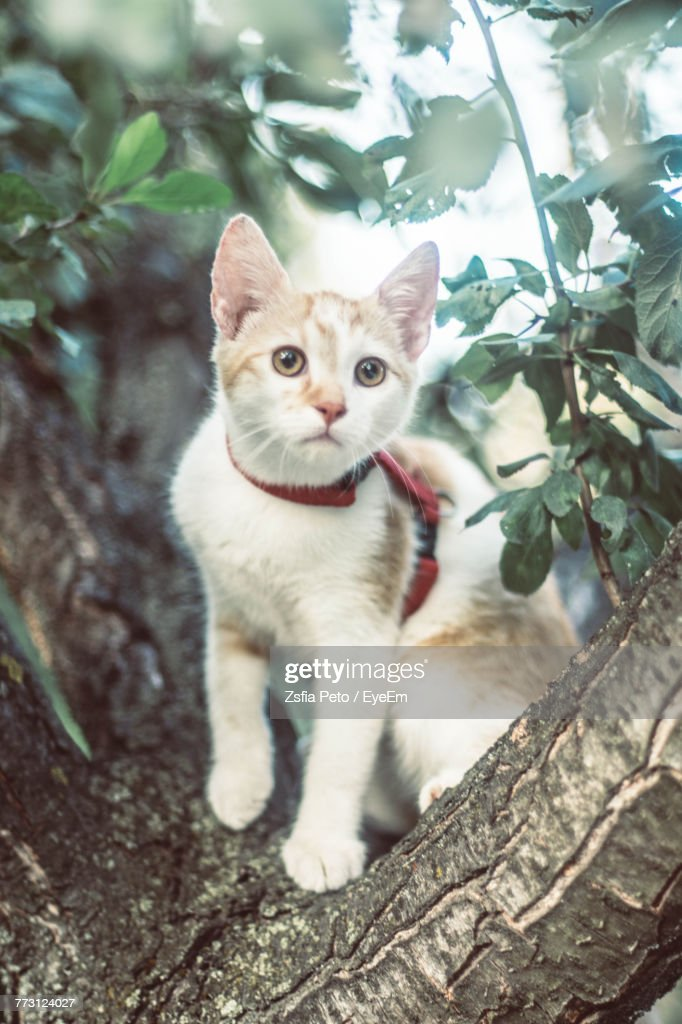 Portrait Of Cat On Tree : Photo