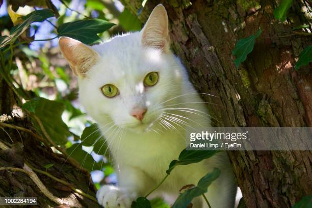 portrait of cat on tree trunk - domestic animals stock photos and pictures