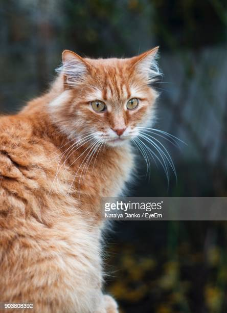 portrait of cat outdoors - cat family stock photos and pictures