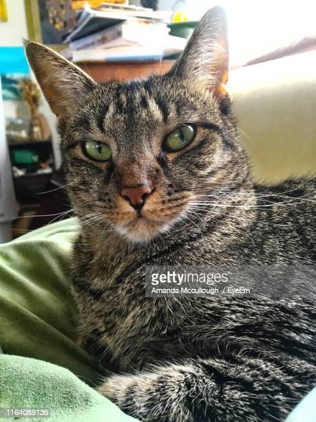 portrait of cat - amanda and amanda stock pictures, royalty-free photos & images