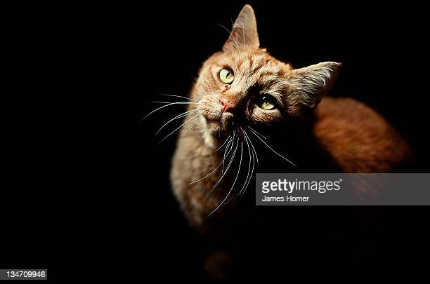 portrait of cat - animal whisker stock pictures, royalty-free photos & images