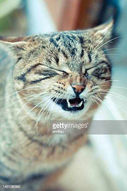 portrait of cat - annfrau stock photos and pictures