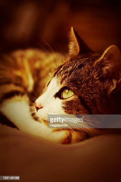 portrait of cat - magdasmith stock pictures, royalty-free photos & images