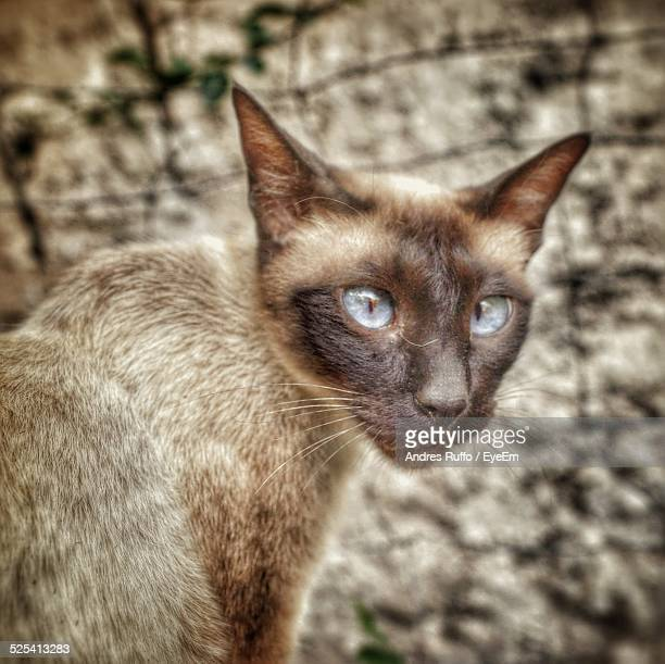 portrait of cat - andres ruffo stock-fotos und bilder