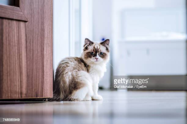 portrait of cat - persian cat stock pictures, royalty-free photos & images
