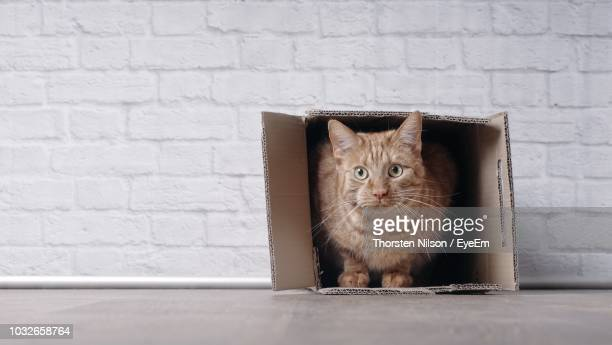 Portrait Of Cat Relaxing In Cardboard Box Against Wall