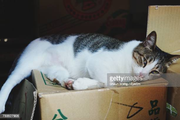 Portrait Of Cat Relaxing On Cardboard Box