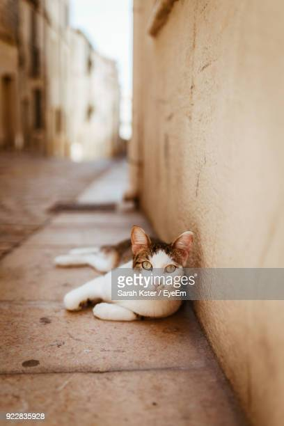 Portrait Of Cat Relaxing On Footpath