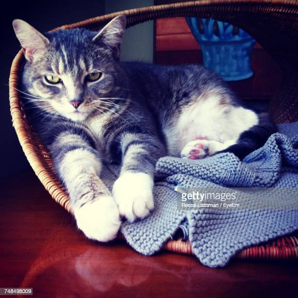 Portrait Of Cat Relaxing On Pet Bed At Home