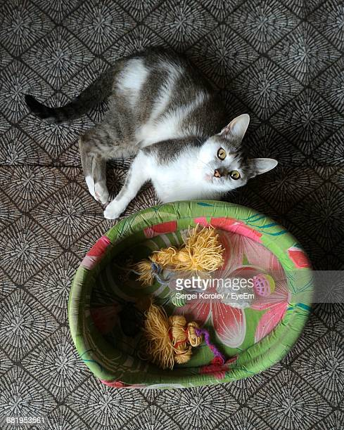 Portrait Of Cat Resting By Pet Bed On Floor