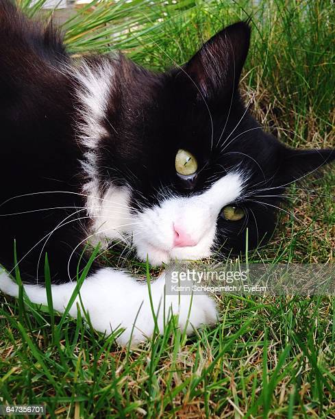 Portrait Of Cat Resting On Grassy Field