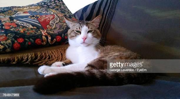 Portrait Of Cat Resting On Sofa