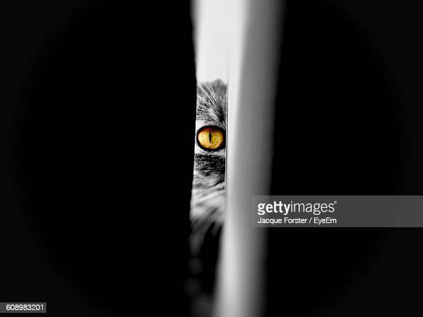 Portrait Of Cat Seen Through Door