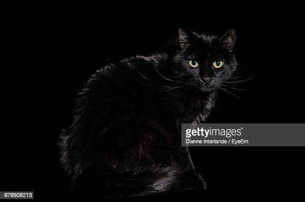 portrait of cat sitting against black background - gatto nero foto e immagini stock