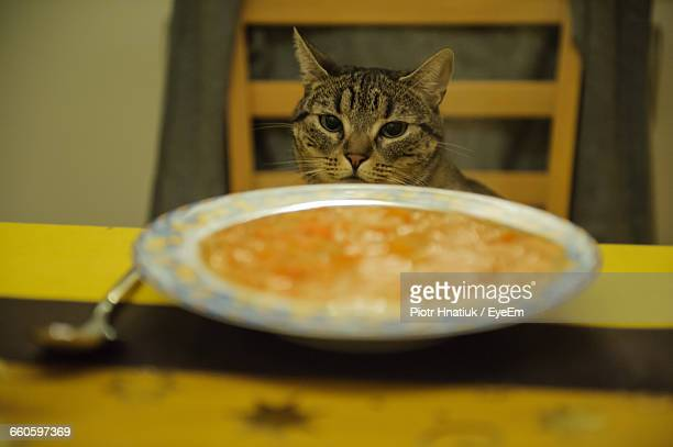 portrait of cat sitting by food served on table - piotr hnatiuk imagens e fotografias de stock