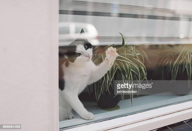 portrait of cat sitting by potted plant on window sill - bortes stockfoto's en -beelden