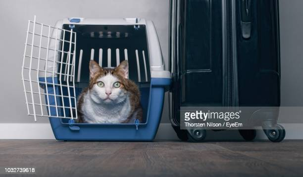 Portrait Of Cat Sitting In Cage By Luggage