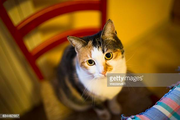 Portrait of cat sitting on a chair