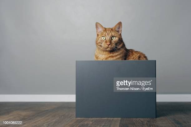 Portrait Of Cat Sitting On Box Against Wall