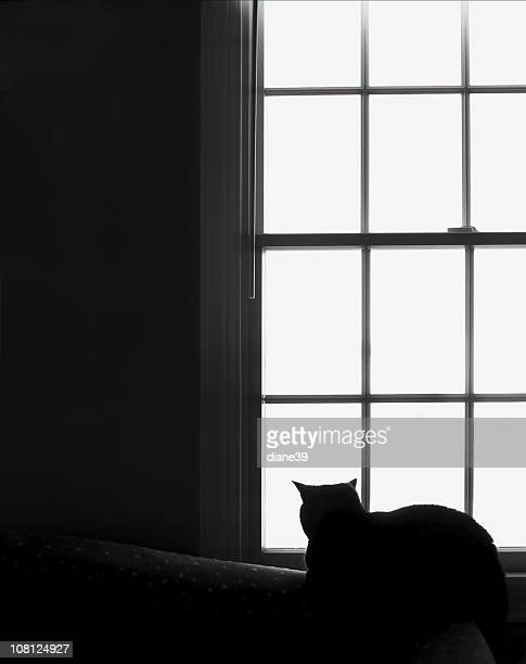 Portrait of Cat Sitting on Couch and Looking Out Window