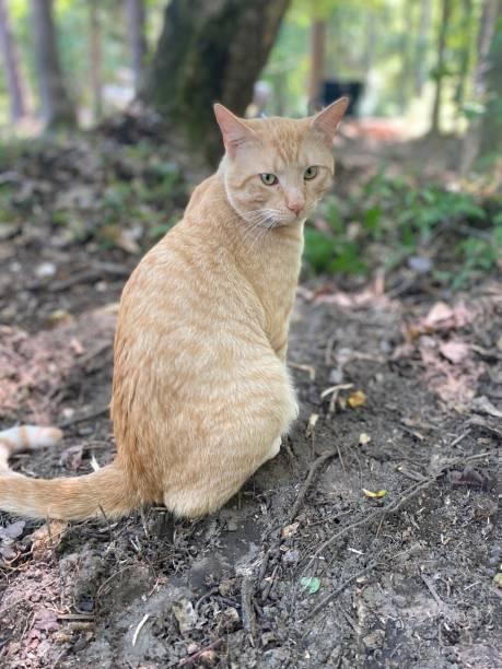 Portrait of cat sitting on field,Gulf Shores,Alabama,United States,USA
