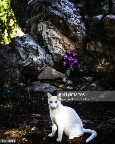 portrait of cat sitting on rock - denia stock pictures, royalty-free photos & images