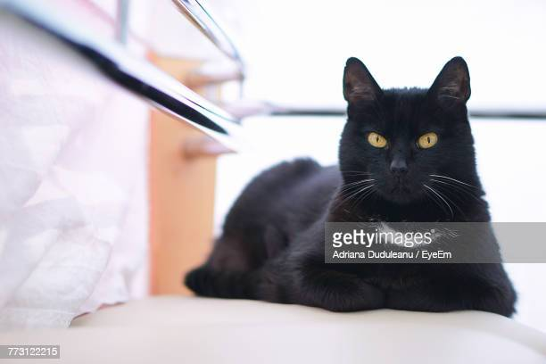 portrait of cat sitting on seat - adriana duduleanu stock photos and pictures