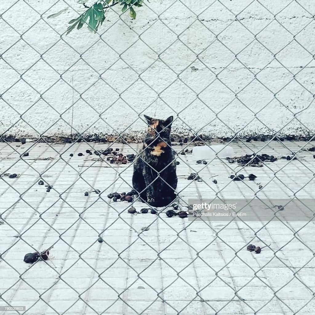 Portrait Of Cat Sitting On Street Seen Through Chainlink Fence Stock ...