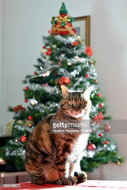 Portrait Of Cat Sitting On Table Against Christmas Tree At Home
