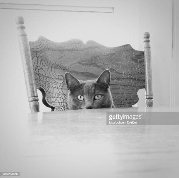 Portrait Of Cat Sitting On Table At Home